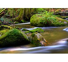 Taggerty River Fern Photographic Print