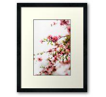 Pink Spring Blossoms Framed Print