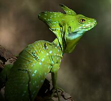 Basiliscus by jimmy hoffman