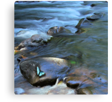 The river and the blue Morpho Canvas Print