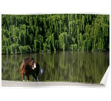 Clydesdale on the lookout Poster