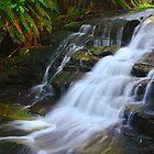 Leura Cascades  by Matthew Smith