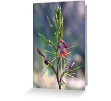Small Tongue Orchid - Cryptostylis leptochila Greeting Card