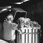 Bagging the wool, Hill End, NSW. by C J Lewis