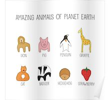 Amazing Animals Poster