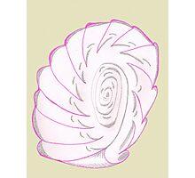 Pink Shell-like Photographic Print
