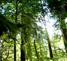 Rainforest, Tofino, Canada by C1oud