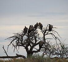 Vultures Having Their 5 o´Clock Break by HELUA