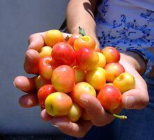 White cherries by TexasRanger