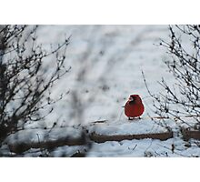 Snowy Beak Photographic Print