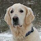 Snow by Trine