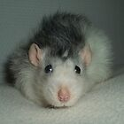 The soft plush rat Kirppu by KanaShow