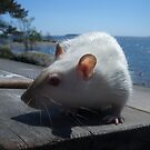 Näpsä chilling on a summer day by KanaShow