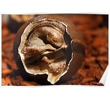 Dinosaur egg with embryo Poster