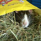 A hay bag! There is no better place! by KanaShow