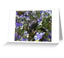 Wild pansies and sun make my June! Greeting Card