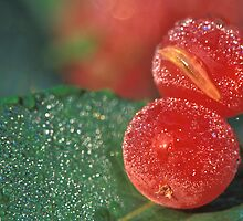 Dewy Red Cranberries by Bill Spengler