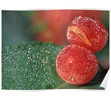Dewy Red Cranberries Poster