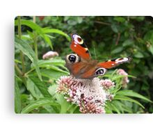 Butterfly Peacock Canvas Print