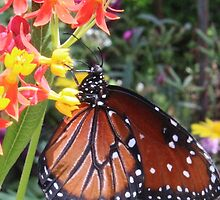 Butterfly on flower by beerman70