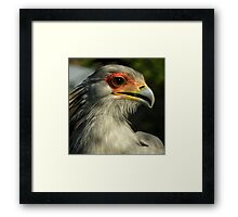 The Beautiful World Of The Flying Wonders ~ Part One Framed Print