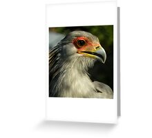 The Beautiful World Of The Flying Wonders ~ Part One Greeting Card
