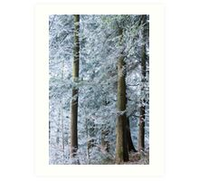 white trees in winter Art Print