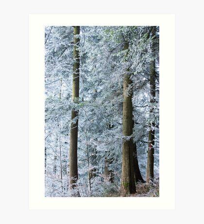 white trees in winter Art Print