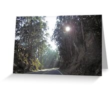 Sunlight filtered through the trees and falling on a stretch of the highway outside San Francisco Greeting Card