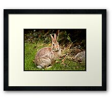 Hello Rabbit Framed Print