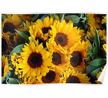 Giant sunflowers for sale in the Swiss city of Lucerne Poster