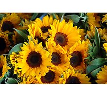 Giant sunflowers for sale in the Swiss city of Lucerne Photographic Print