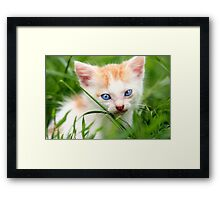 Adorable kitty in grass Framed Print