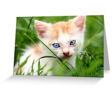 Adorable kitty in grass Greeting Card
