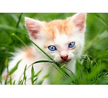 Adorable kitty in grass Photographic Print