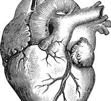 Anatomical Heart by tshirtdesign