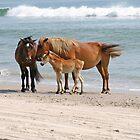 Wild Horses by Karl R. Martin