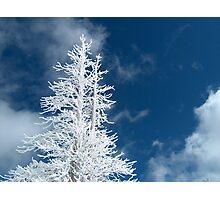 Snow Dust Photographic Print