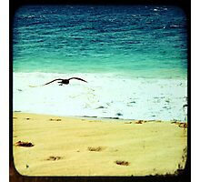 BEACH BLISS - Soaring Photographic Print