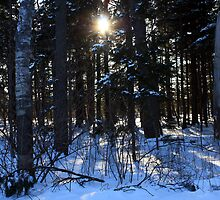 Winter Forest by HALIFAXPHOTO