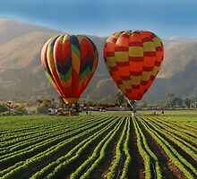Nothing but Hot Air and Lettuce by Matt Rhodes