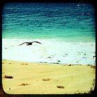 BEACH BLISS - Soaring by moderatefanatic