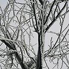 Frosty Tree by Stephen Thomas