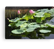 Water Lily Zen  Canvas Print