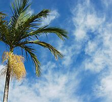 Palm in Yamba, New South Wales by groophics