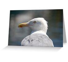 Herring Gull Greeting Card
