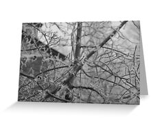 Hoarfrost in Action Greeting Card