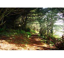 Oregon coast trail Photographic Print