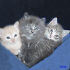 Three kittens in a Blanket by SANDRA BROWN