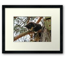 Hang in there, Mia Framed Print